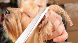cosmetica-veterinara1